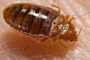 Disease Outbreak Control Division Bed Bugs