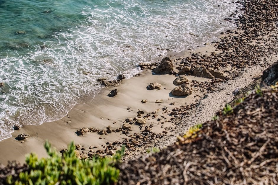 disease outbreak control division stinging seaweed disease