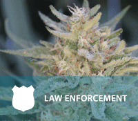 Med-mari-law-enforcement