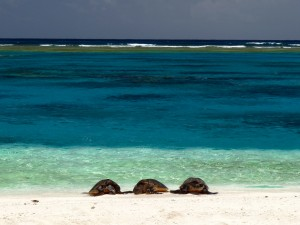 3honu far at trig