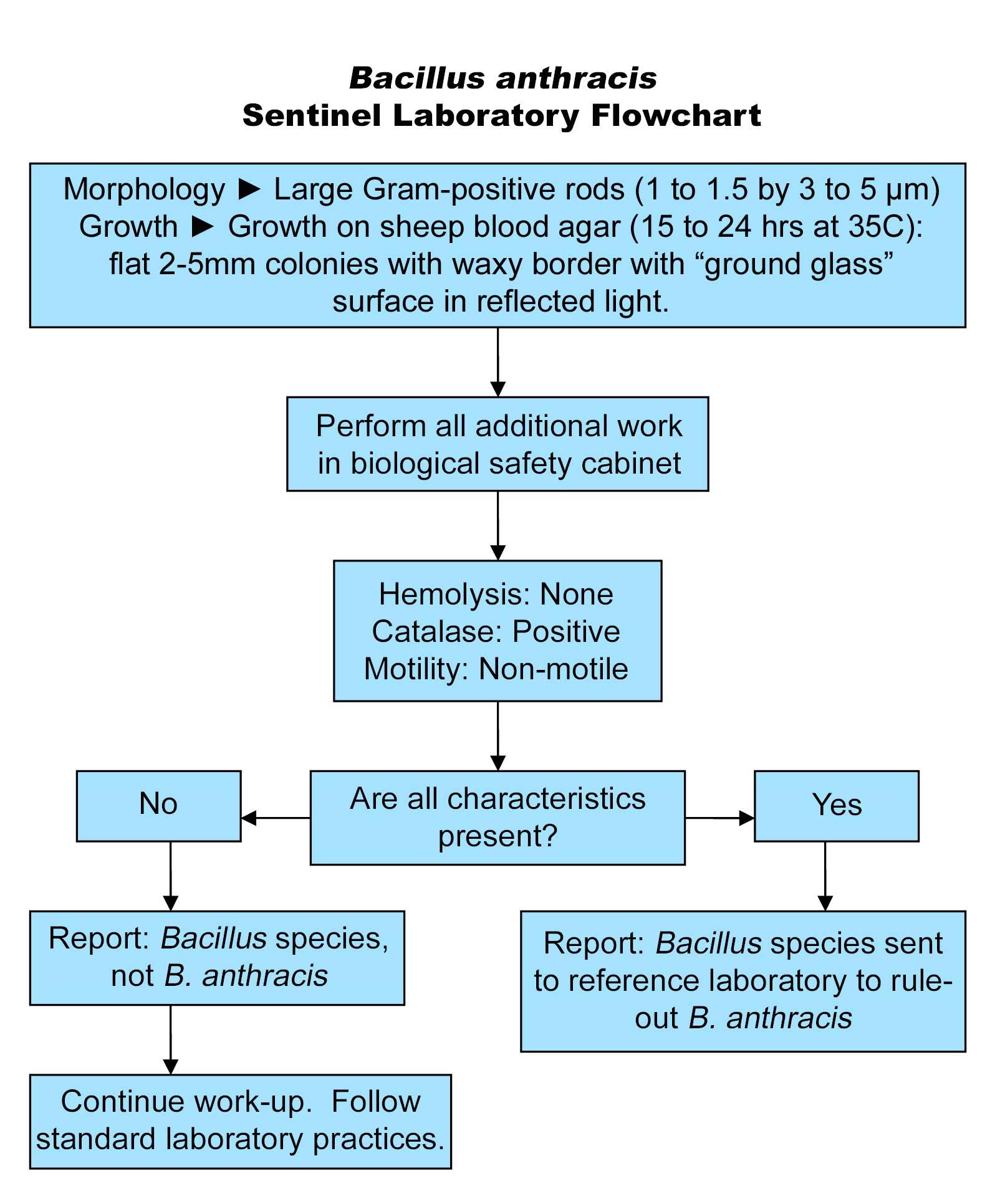 Bacillus anthracis Sentinel Laboratory Flowchart